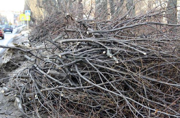 Вывоз веток, деревьев в Тольятти